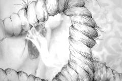 De la serie MACROME  Doble  50 x  70 lápiz,  sobre papel, y tinta sobre papel calco